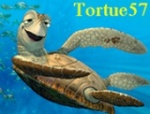 tortue57