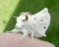 not a moth