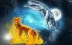 Iceland wolf