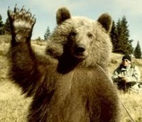 l'ours vosgien
