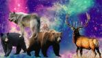 Free forum : The Kingdoms Of Jasper 1-40