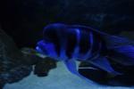 _____________________Оборудование морских аквариумов 27-14