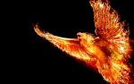 Phoenix 1er