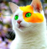 SilentStar