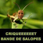 Relounette