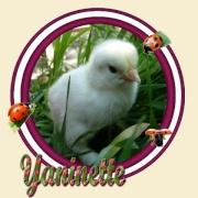 Yaninette