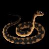 SnakeKat