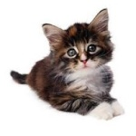 Meow Kats