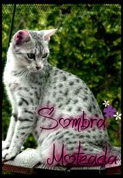 Sombra Moteada