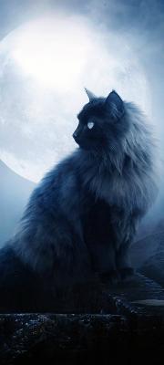 Moonkit
