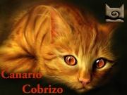 Canario Cobrizo