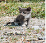 Zarpa Helada