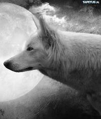 Geralt_Riv