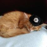 Millicent the Cat