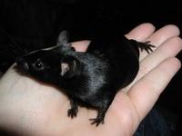 Mouse Behavior 1079-45