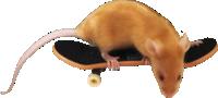 Mouse Behavior 1360-5
