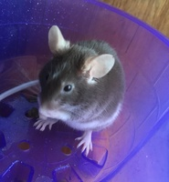 Mouse Behavior 388-55