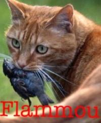 Nuage de Flamme
