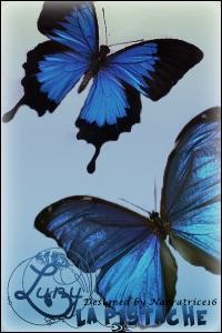 Rêve du Bleuet