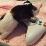 XboxTrollen