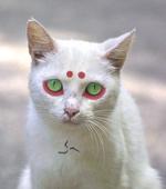 Cat-mimaro