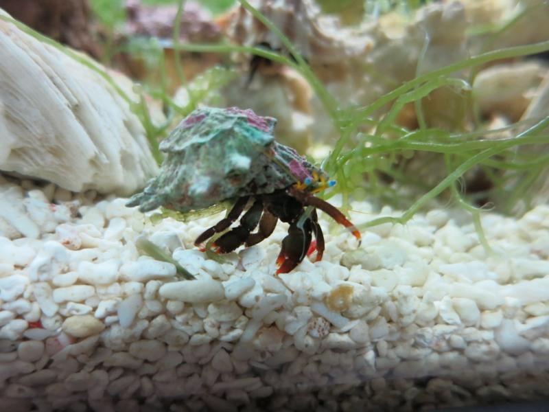 Aquarium BHMs Img_0811