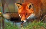 Foxsen