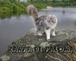 Zarpa de Paloma