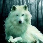 haku white wolf