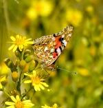 créer un forum : Toute la nature en photos 6-82
