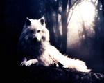Programador Wolf