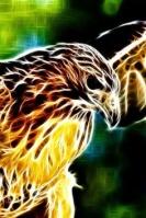 Falcon-eyes