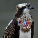 balbuzzard