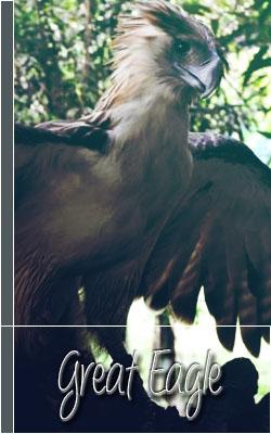 Gran Águila