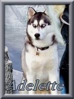 Adelette