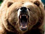DG_Big.Bad.Bruins