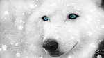 Wolf Loup