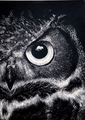 OwlyShit