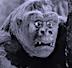 Gorilla No