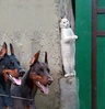 CatSpy
