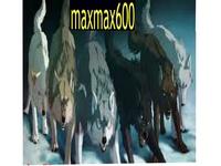 maxmax600