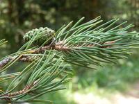 Forestrysimulation