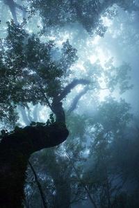 Brouillard Obscur