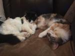 Les chats de l'association 4-19