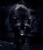 Helyoz Wolflight