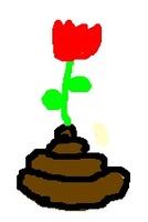La Fleur des LCS
