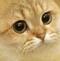 :cate: