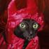 :gato: