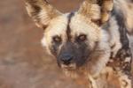 Capao Redondo Wild Dogs