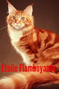Étoile Flamboyante